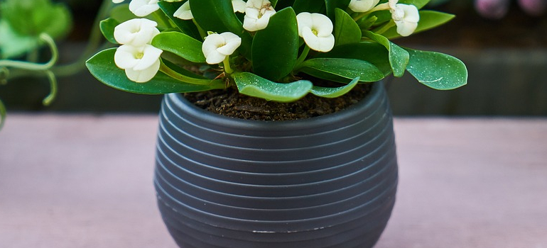a small plant in a pot